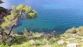 Lonely tree and sea on Akamas peninsula Cyprus. stock footage