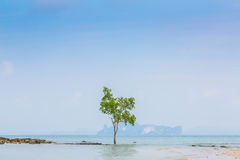 Lonely tree on the  Sea Stock Images