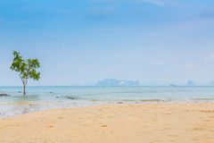 Lonely tree on the  Sea Royalty Free Stock Photo