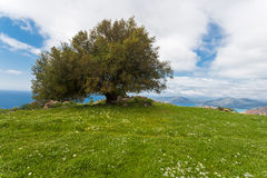 Lonely tree. Royalty Free Stock Photography
