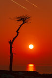 Lonely tree at seacoast on a sunset background Stock Photo