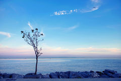 Lonely tree at the seaside Stock Photos