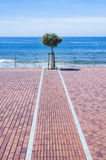 Lonely Tree at Seaside Stock Images