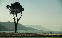 Lonely tree on seaside. Royalty Free Stock Photos