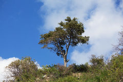 Lonely tree. Separate green tree against the blue sky and clouds Royalty Free Stock Photos