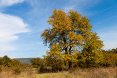 Lonely tree. In September, tinted in autumn colors Stock Photos