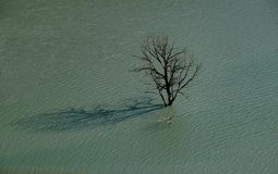 Lonely tree amidst the flooded land Royalty Free Stock Photos