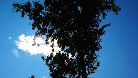 A lonely tree shakes the leaves under the dome of the sky.  stock video footage