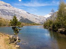 Lonely tree on the shore of an alpine mountain lake. Stock Photos