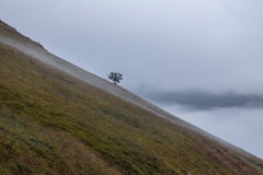 Lonely tree. A lonely tree on the side of a mountain, with fog and mist below Stock Images