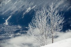 Lonely tree on snowy mountain Royalty Free Stock Photography