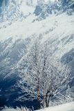 Lonely tree on snowy mountain Stock Images
