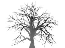 Lonely tree silhouette Royalty Free Stock Image