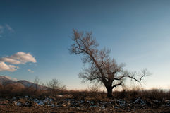 Lonely tree silhouette on open field at sunset vibrant orange. Mountains of Azerbaijan Caucasus Stock Photography