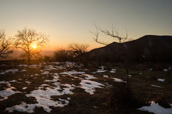 Lonely tree silhouette on open field at sunset vibrant orange. Mountains of Azerbaijan Caucasus Royalty Free Stock Photo