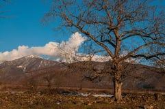 Lonely tree silhouette on open field at sunset vibrant orange. Mountains of Azerbaijan Caucasus Stock Photo