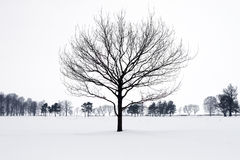 Lonely tree silhouette in winter park. Stock Image