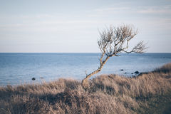 The lonely tree Stock Image