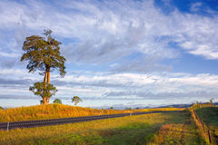 Single tree on hill. Single tree beside road with fence at sunrise Stock Photos