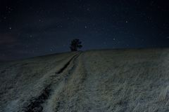 A lonely tree sits on a hill under the stars. Royalty Free Stock Photos
