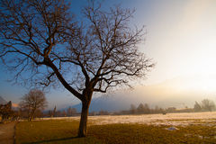 A lonely tree. Sits on the midst of this snowy field Stock Image