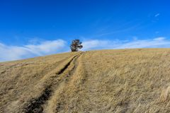 A lonely tree sits on the top of a grass covered hill under a beautiful, clear, radiant, day time sky. royalty free stock photos