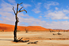 Lonely tree skeleton, Deadvlei, Namibia Royalty Free Stock Photography