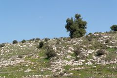 Lonely tree on the slope of the hill. Lonely tree on the slope of the Mediterranean hill Royalty Free Stock Images