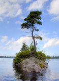 A lonely tree on a small island Royalty Free Stock Photo