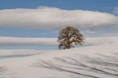 Lonely tree on snow Royalty Free Stock Image