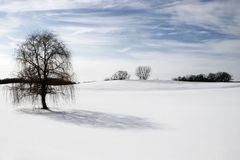 Lonely tree in snow covered hill Royalty Free Stock Photos