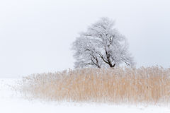 Lonely tree on the snow-covered lake Royalty Free Stock Photography