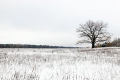Lonely tree .  snow. Stock Photos