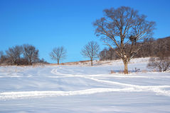 Lonely tree on the snow field Stock Image
