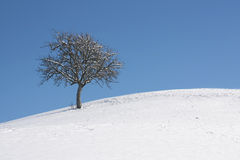 Lonely tree on snow hill Stock Photography