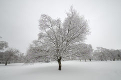 Lonely tree in snow Stock Image