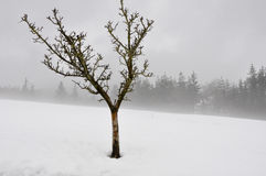 Lonely tree in snow scape (Spain) Stock Photo