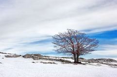 Lonely tree in snow Stock Images