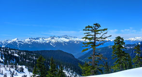 Lonely tree and snowcapped mountains. Douglas Fur tree on the poupular trail to Elfin Lakes near Vancouver and Squamish. British C Stock Photo