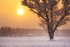 Lonely tree in snowfall in early morning Stock Photo