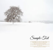 Lonely tree in snowfield Stock Image