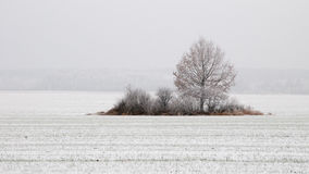 Lonely tree in a snowy field stock images