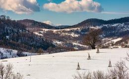 Lonely tree on snowy hillside. Beautiful winter scenery in mountainous rural area Stock Photo