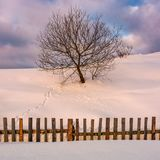 Lonely  tree on snowy hillside behind the fence. Beautiful countryside scenery in winter morning light Royalty Free Stock Photo