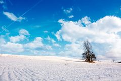 Lonely tree on a snowy hillside. Lovely nature scenery on fine winter day with cloudy blue sky Royalty Free Stock Image