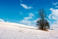 Lonely tree on a snowy hillside. Lovely nature scenery on fine winter day with cloudy blue sky Royalty Free Stock Photos