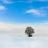 Lonely tree in snowy landscape Royalty Free Stock Images