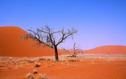 Lonely tree in Sossusvlei Stock Image