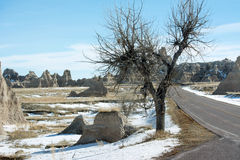 Lonely tree in the South Dakota Badlands. A lonely tree in the Badlands of South Dakota USA stock images