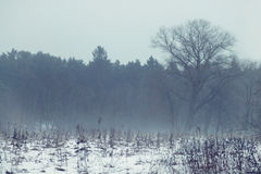 Lonely tree in the spring field with snow and mystical fog. Magic spring fog over the field and lonely tree in the middle with dirty melting snow royalty free stock image